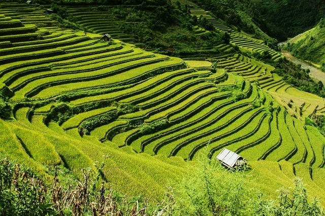 Reisfelder China